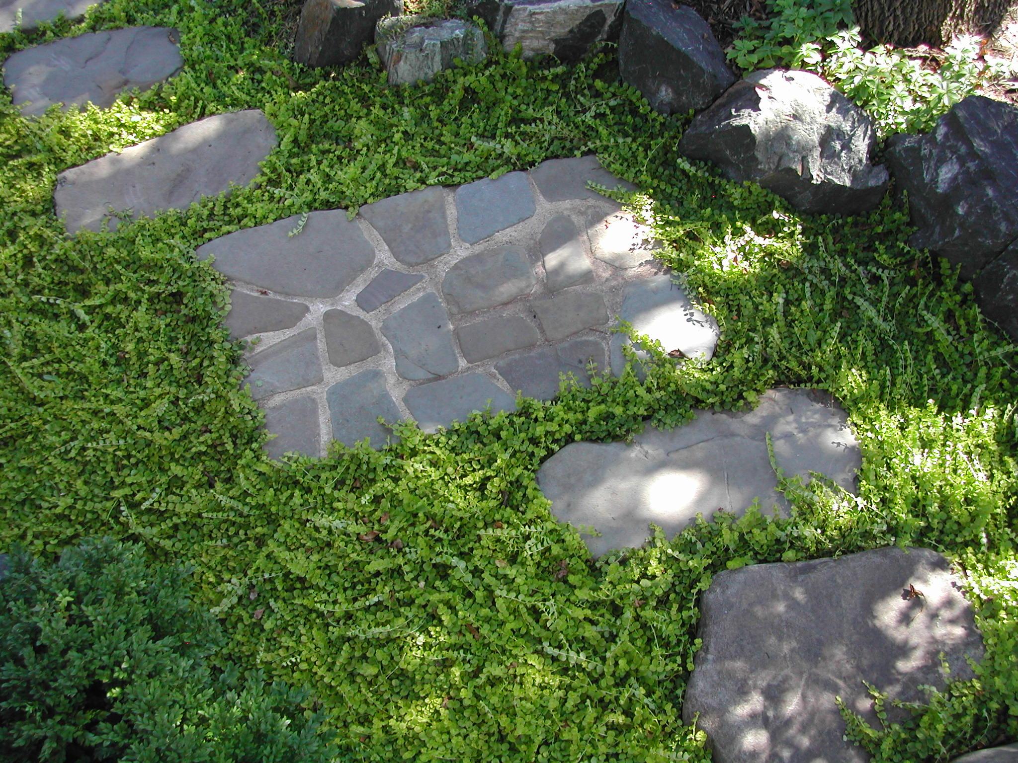 Minnesota Landscape Design Company Niwa Studio