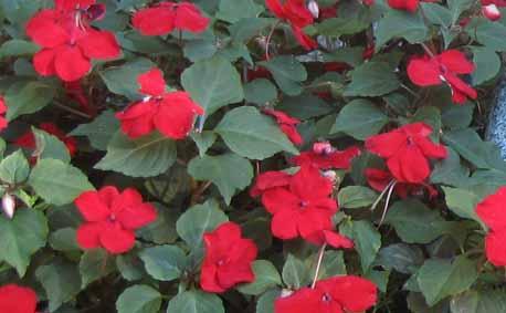 minnesota landscape design company  niwa design studio, ltd, Natural flower
