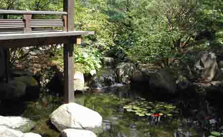 Web for Japanese koi pond garden design